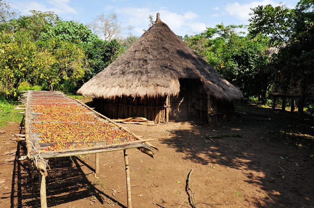 Äthiopischer Gartenkaffee